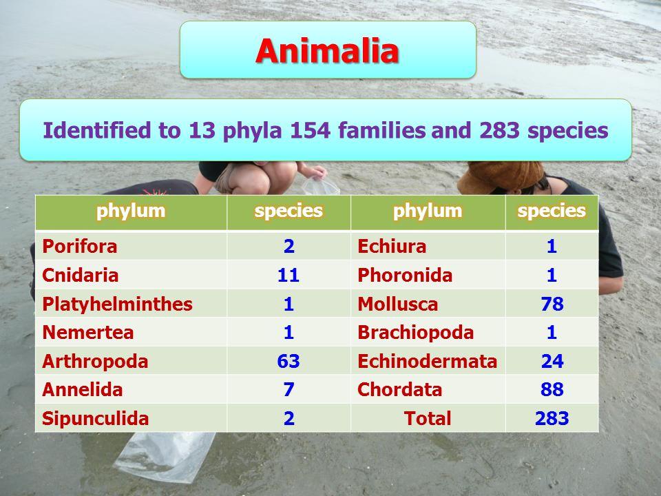 AnimaliaAnimalia Identified to 13 phyla 154 families and 283 species Identified to 13 phyla 154 families and 283 species Porifora2Echiura1 Cnidaria11Phoronida1 Platyhelminthes1Mollusca78 Nemertea1Brachiopoda1 Arthropoda63Echinodermata24 Annelida7Chordata88 Sipunculida2Total283