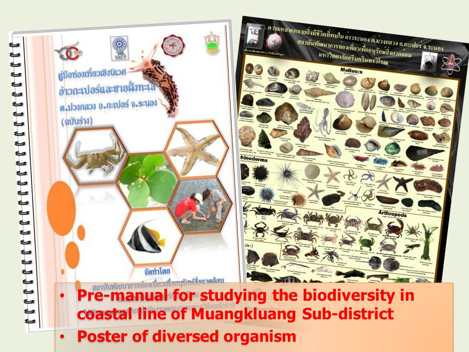 Pre-manual for studying the biodiversity in coastal line of Muangkluang Sub-district Poster of diversed organism Pre-manual for studying the biodiversity in coastal line of Muangkluang Sub-district Poster of diversed organism