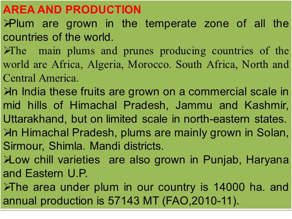 AREA AND PRODUCTION  Plum are grown in the temperate zone of all the countries of the world.  The main plums and prunes producing countries of the w