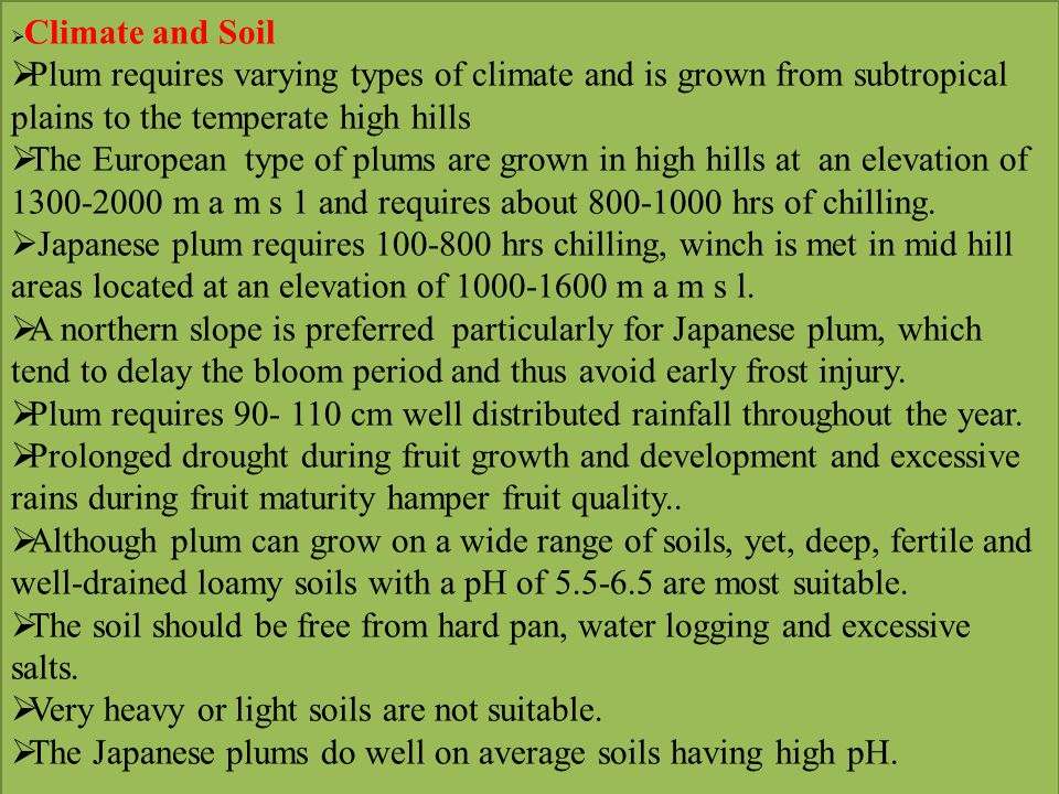 Crop regulation and Quality improvement  Generally plum tends to bear heavy crops and bear under sized fruits of low-quality, thinning therefore, is necessary to increase the fruit size and uniformity in colour of fruit and to stimulate flower initiation for the regulation of next year s crop.