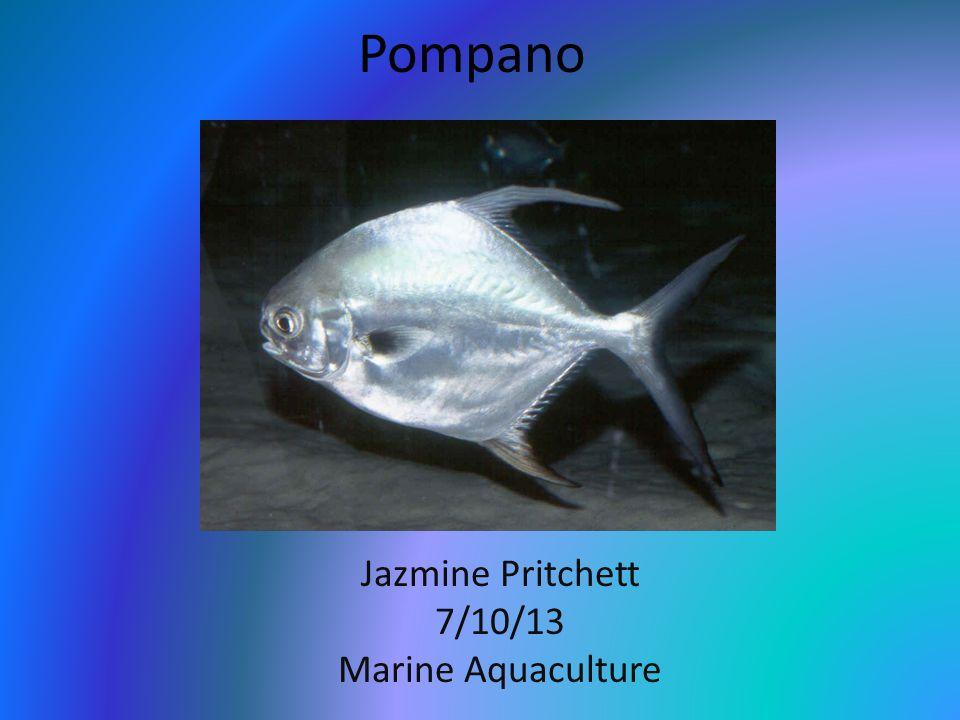 Pompano Jazmine Pritchett 7/10/13 Marine Aquaculture