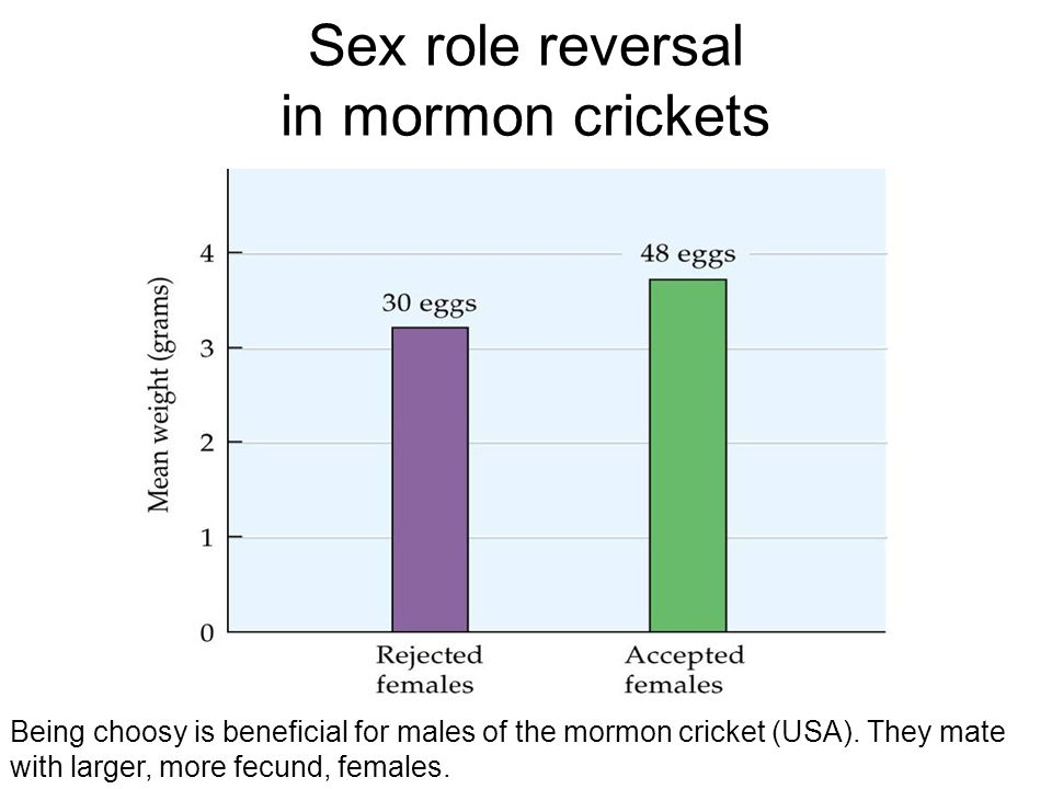 Being choosy is beneficial for males of the mormon cricket (USA). They mate with larger, more fecund, females.