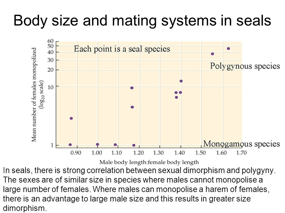 Body size and mating systems in seals In seals, there is strong correlation between sexual dimorphism and polygyny. The sexes are of similar size in s