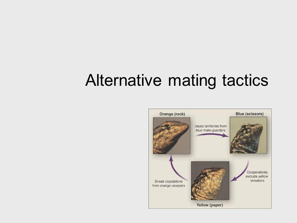 Alternative mating tactics