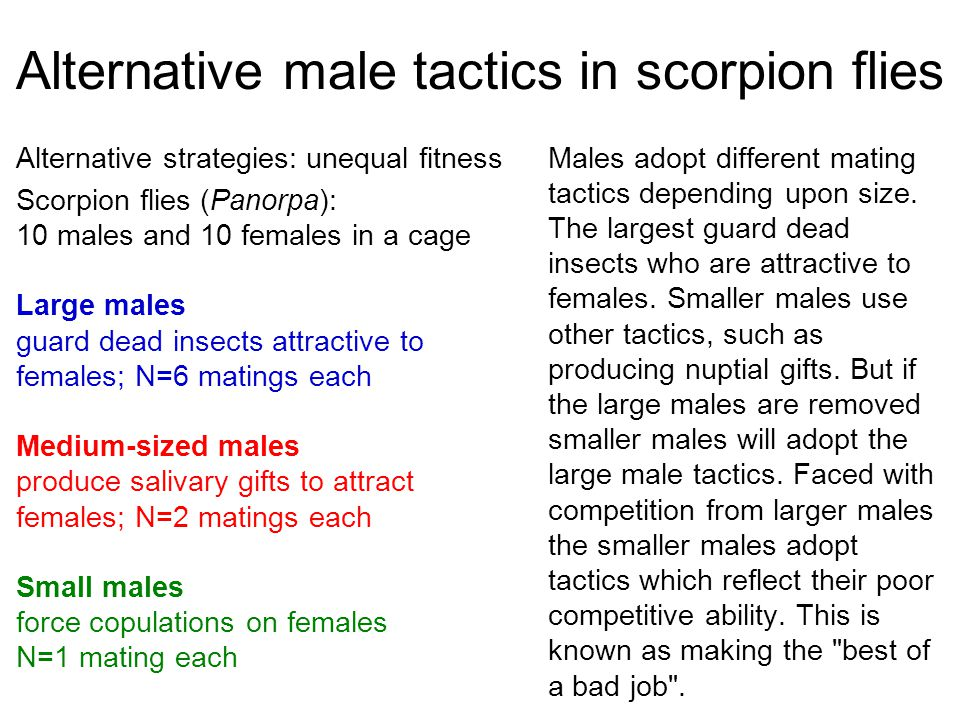 Alternative male tactics in scorpion flies Males adopt different mating tactics depending upon size. The largest guard dead insects who are attractive