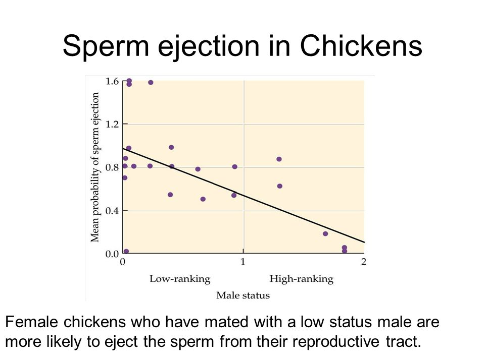 Sperm ejection in Chickens Female chickens who have mated with a low status male are more likely to eject the sperm from their reproductive tract.