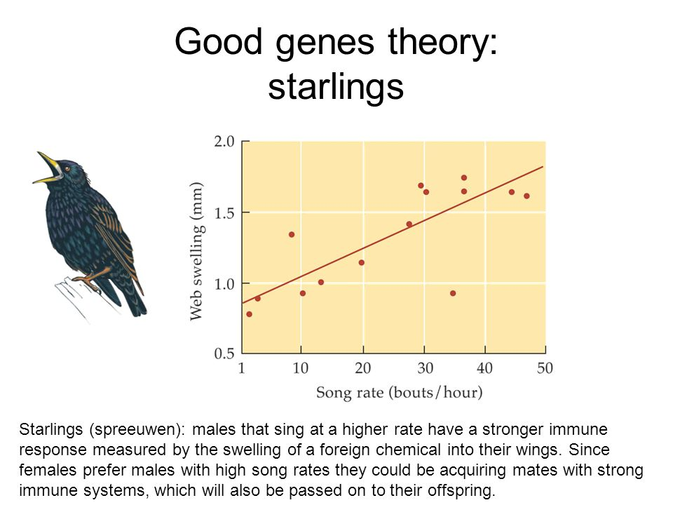Good genes theory: starlings Starlings (spreeuwen): males that sing at a higher rate have a stronger immune response measured by the swelling of a for