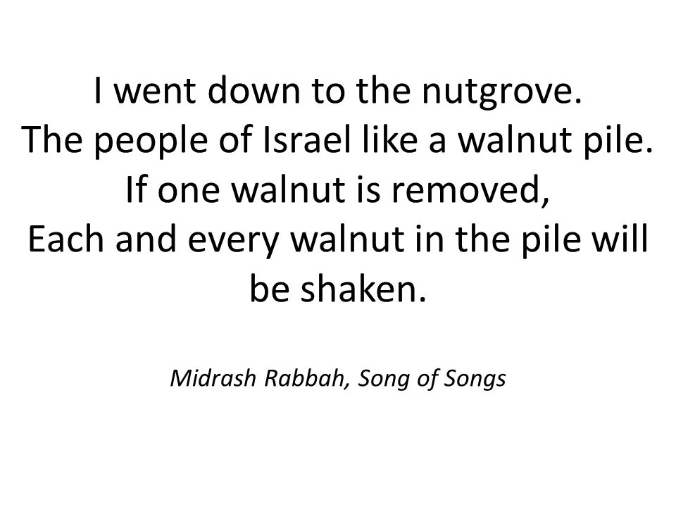 I went down to the nutgrove. The people of Israel like a walnut pile. If one walnut is removed, Each and every walnut in the pile will be shaken. Midr