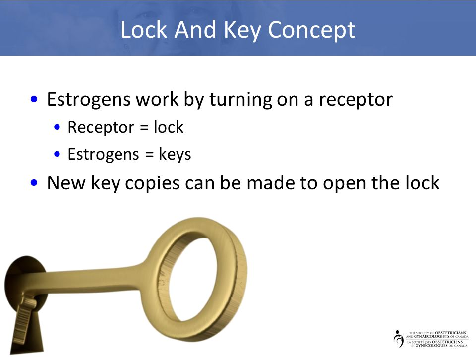 Lock And Key Concept Estrogens work by turning on a receptor Receptor = lock Estrogens = keys New key copies can be made to open the lock