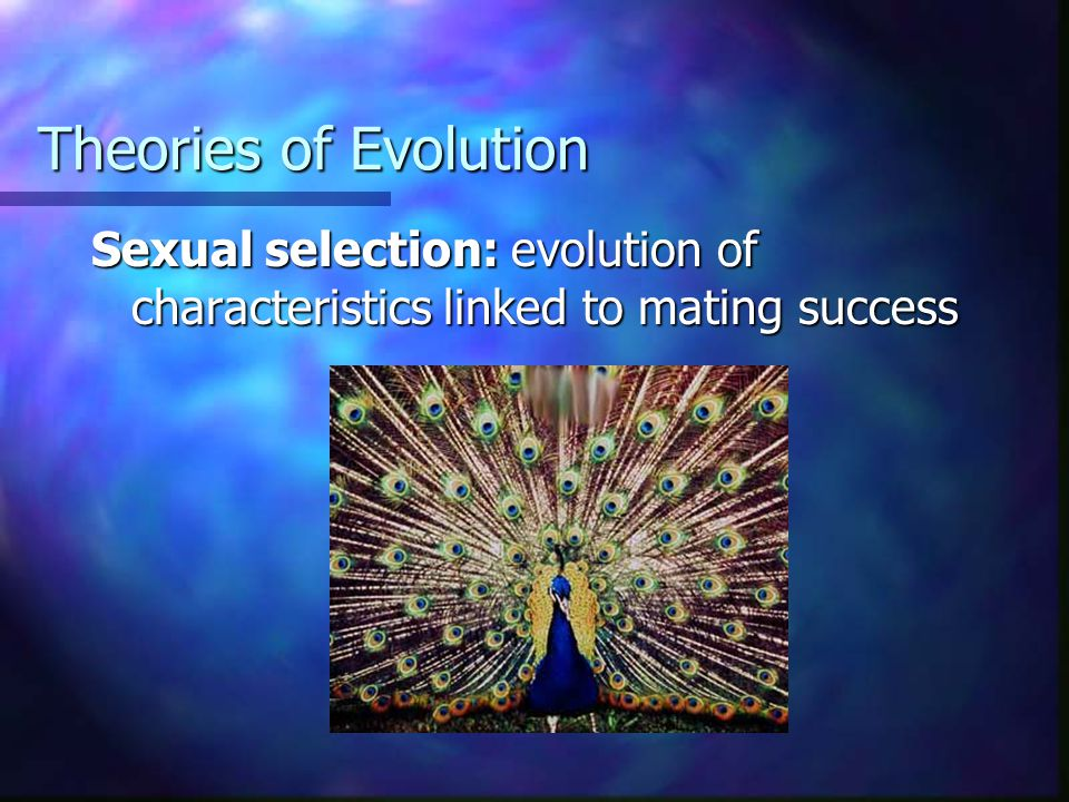 Theories of Evolution Sexual selection: evolution of characteristics linked to mating success