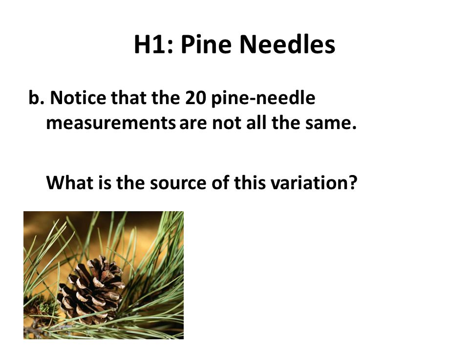 H1: Pine Needles b. Notice that the 20 pine-needle measurements are not all the same.