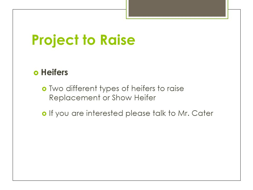 Project to Raise  Heifers  Two different types of heifers to raise Replacement or Show Heifer  If you are interested please talk to Mr.