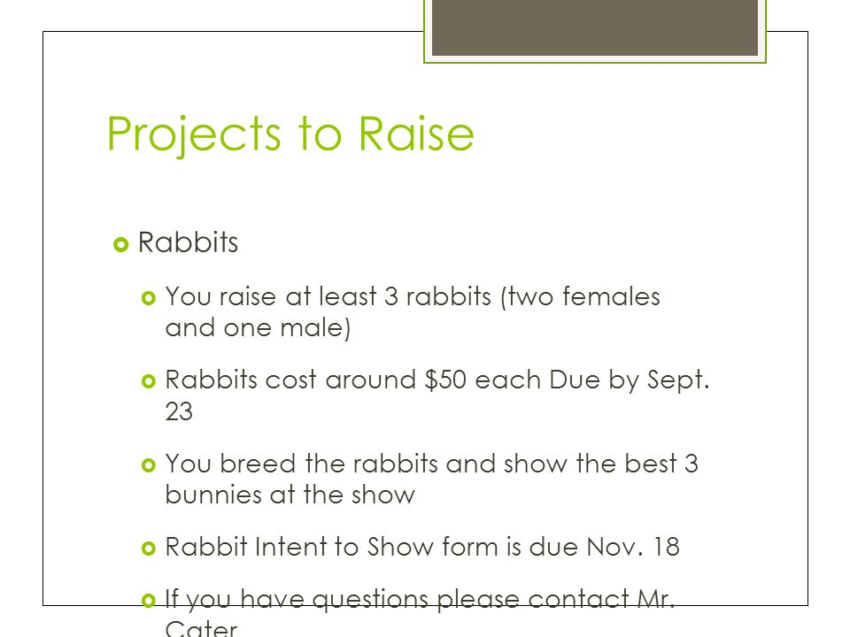 Projects to Raise  Rabbits  You raise at least 3 rabbits (two females and one male)  Rabbits cost around $50 each Due by Sept.