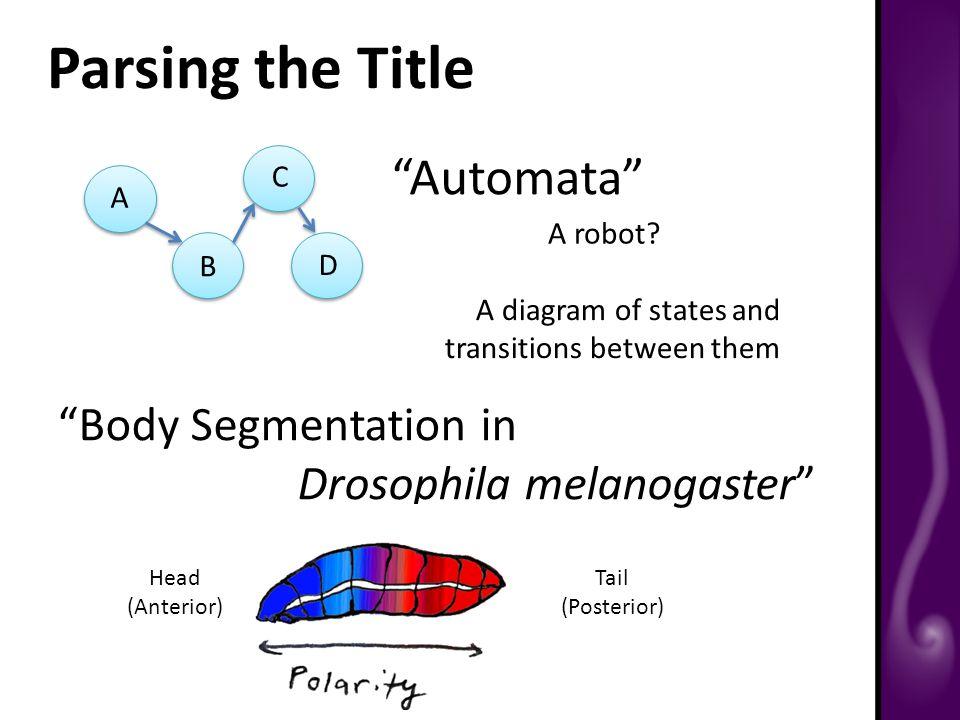 Parsing the Title Automata A robot.