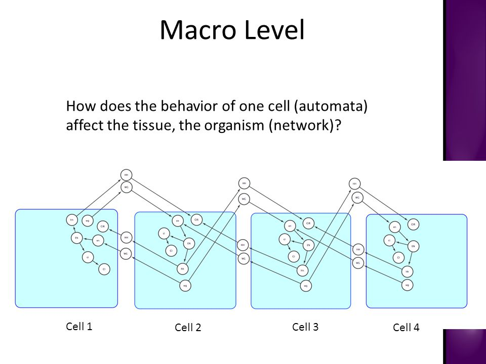 Macro Level Cell 1 Cell 2 Cell 3 Cell 4 How does the behavior of one cell (automata) affect the tissue, the organism (network)?