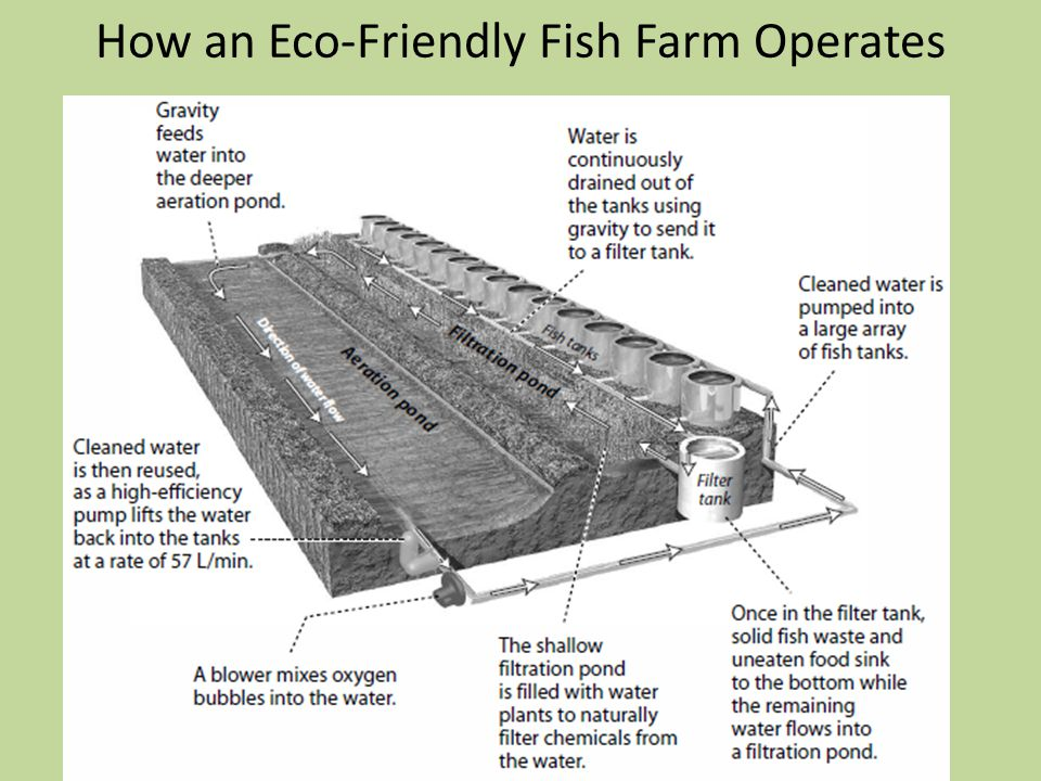 How an Eco-Friendly Fish Farm Operates