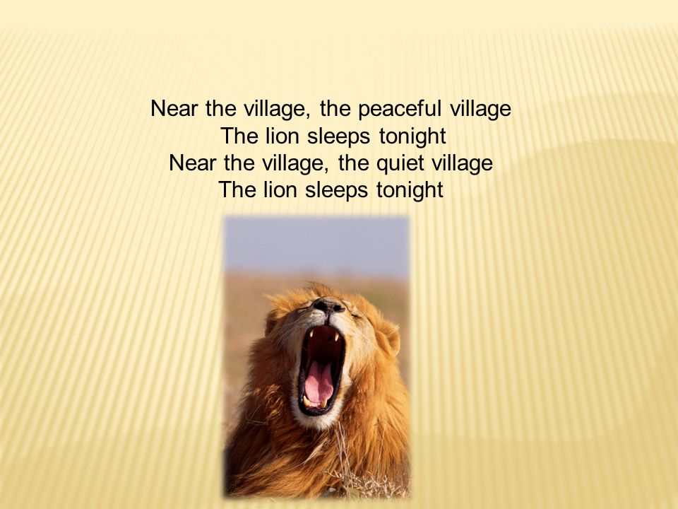 Near the village, the peaceful village The lion sleeps tonight Near the village, the quiet village The lion sleeps tonight