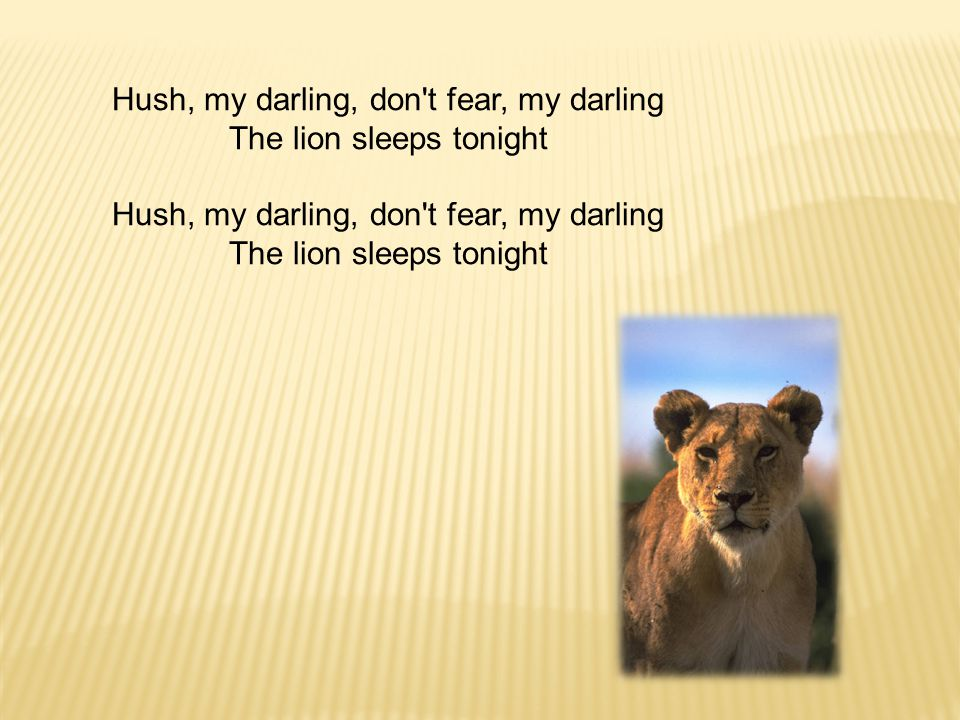 Hush, my darling, don t fear, my darling The lion sleeps tonight Hush, my darling, don t fear, my darling The lion sleeps tonight