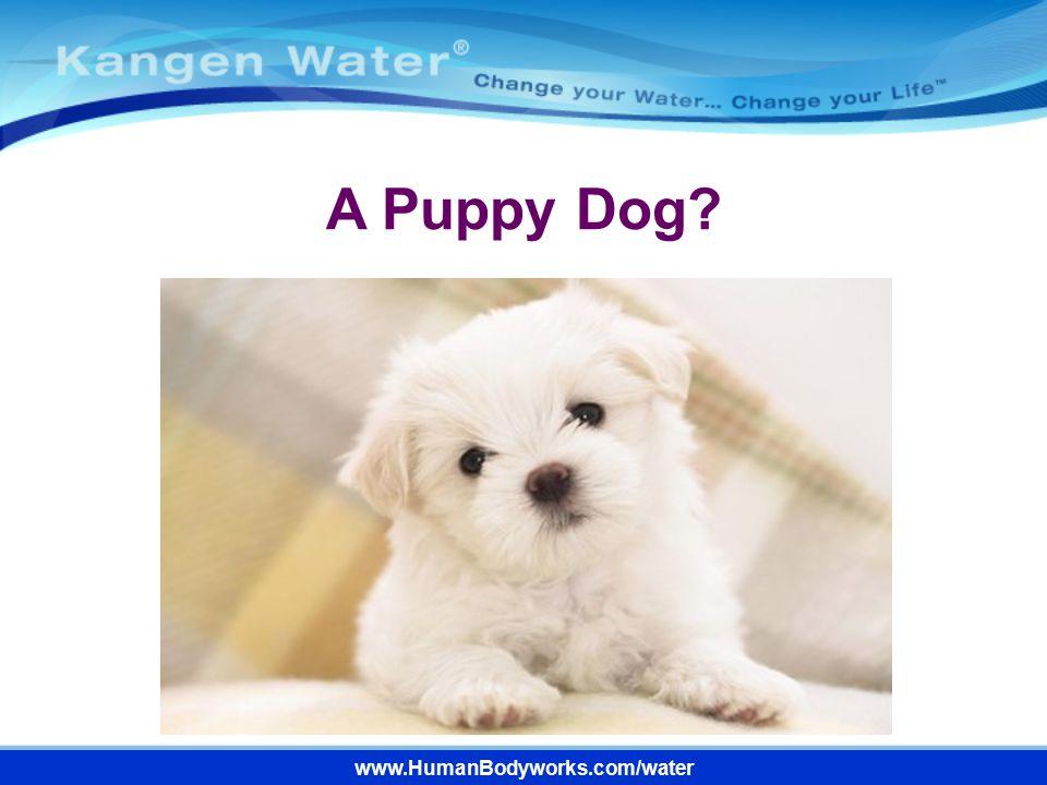 www.HumanBodyworks.com/water A Puppy Dog?