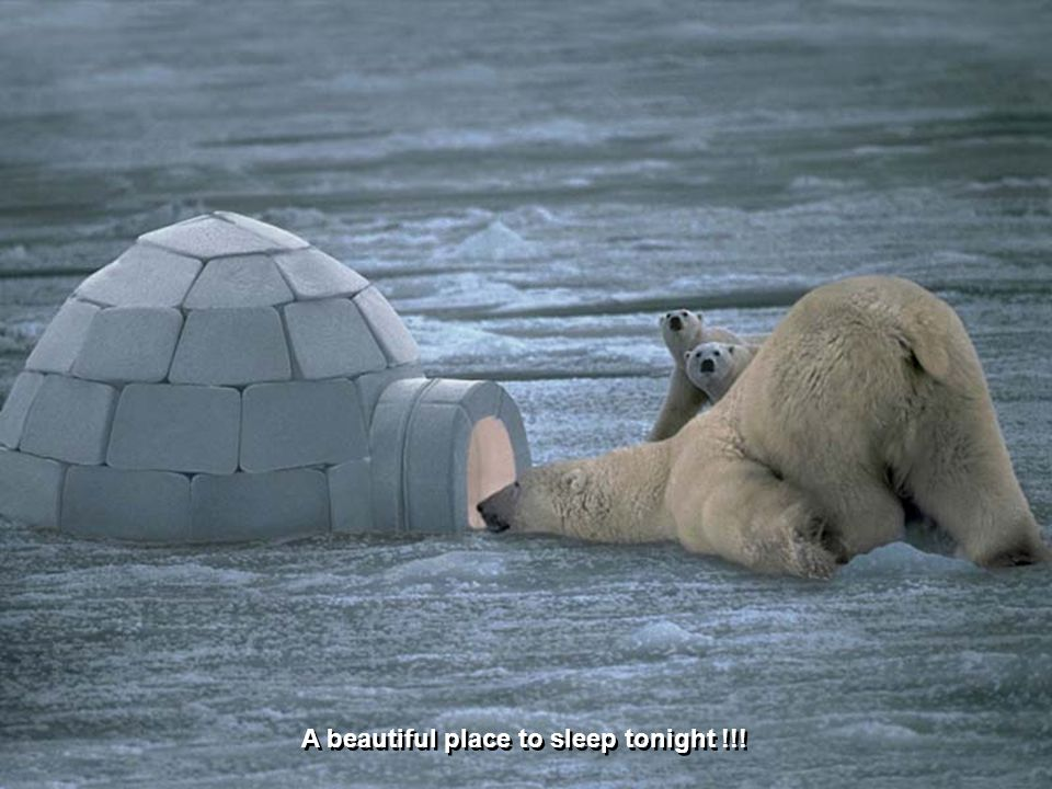 Welcome to the Arctic Motel with all the mod cons for the polar bear!!!