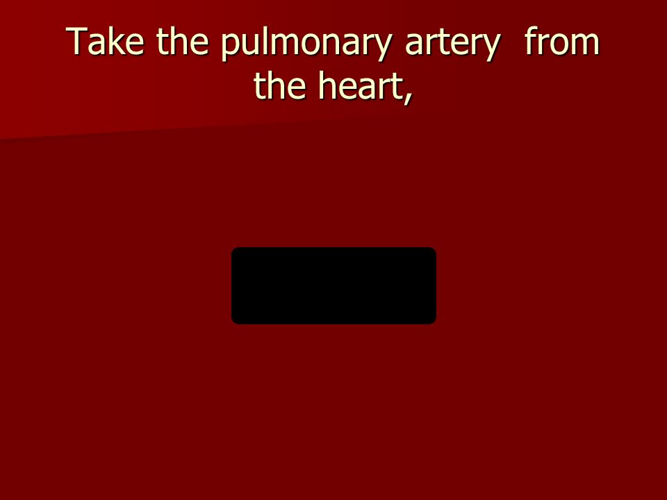 Take the pulmonary artery from the heart,