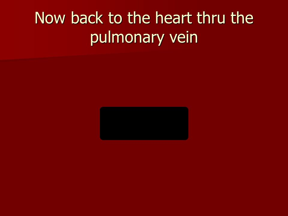 Now back to the heart thru the pulmonary vein