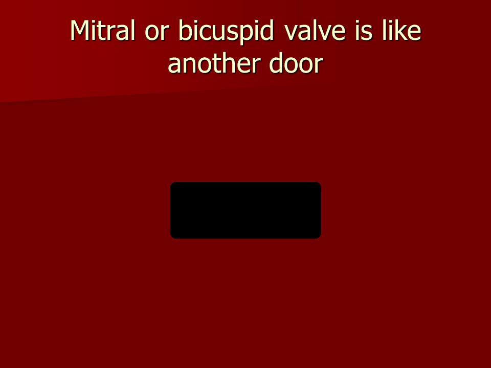 Mitral or bicuspid valve is like another door