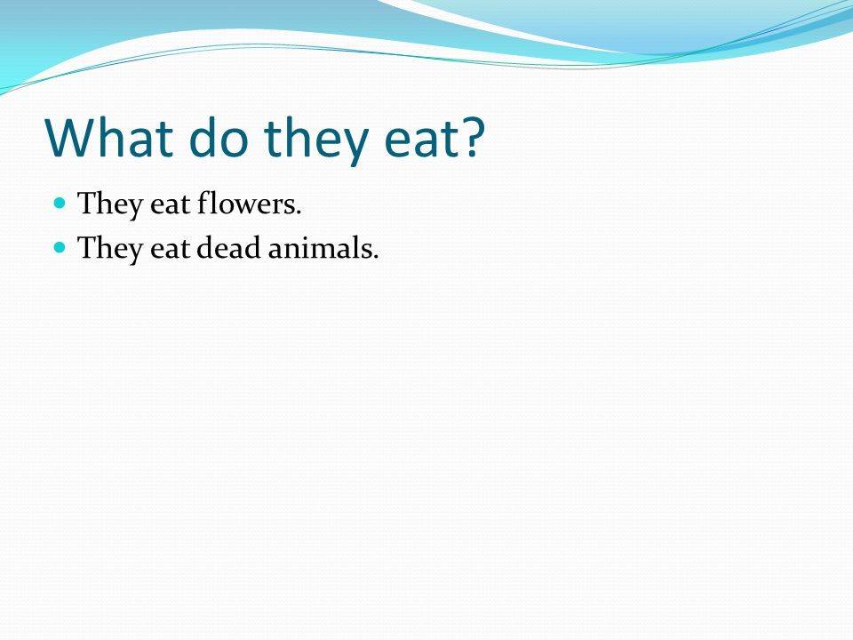 What do they eat They eat flowers. They eat dead animals.