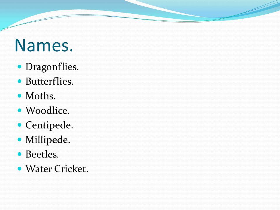 Names. Dragonflies. Butterflies. Moths. Woodlice. Centipede. Millipede. Beetles. Water Cricket.