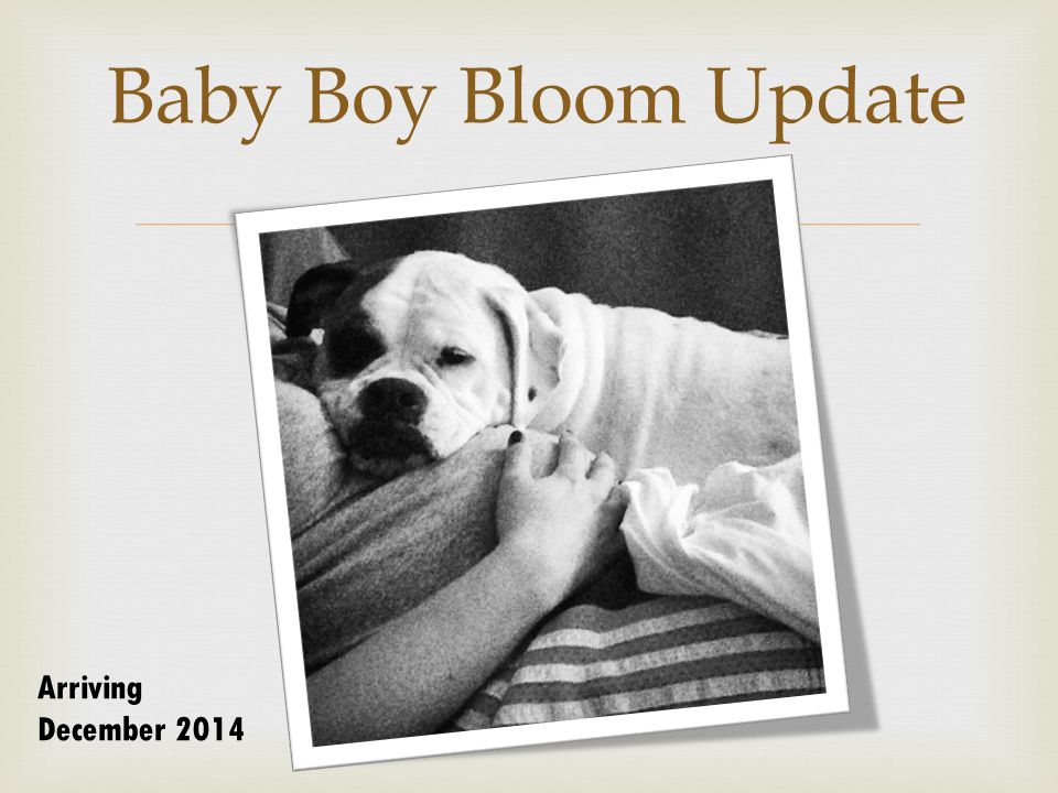  Baby Boy Bloom Update Arriving December 2014