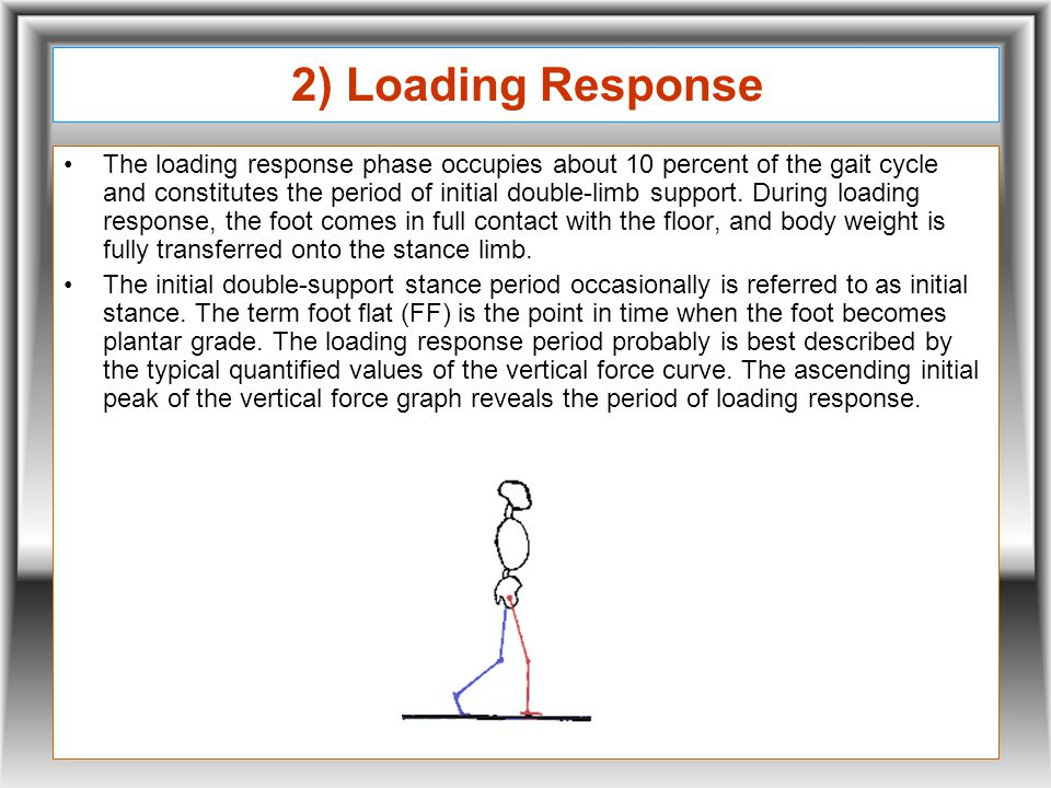 2) Loading Response The loading response phase occupies about 10 percent of the gait cycle and constitutes the period of initial double-limb support.