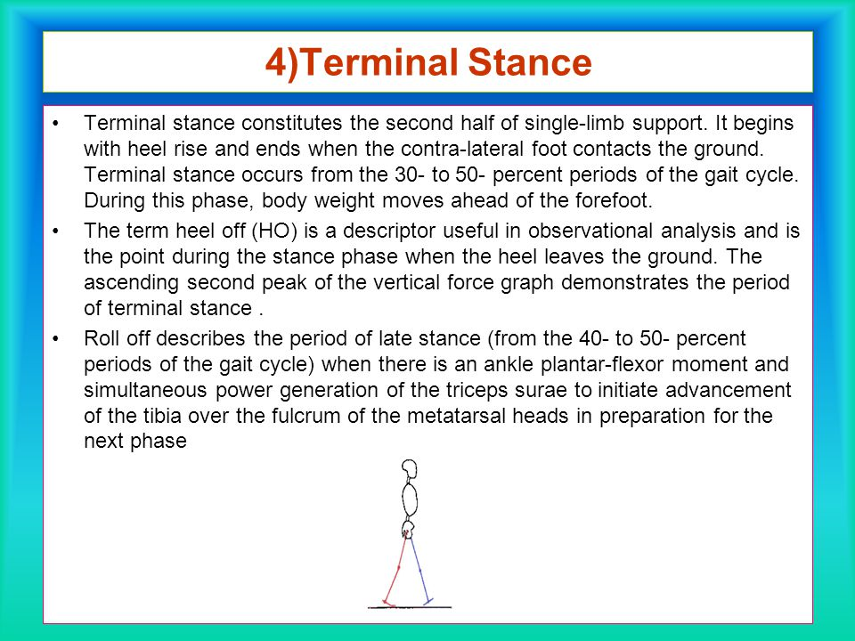 4)Terminal Stance Terminal stance constitutes the second half of single-limb support. It begins with heel rise and ends when the contra-lateral foot c