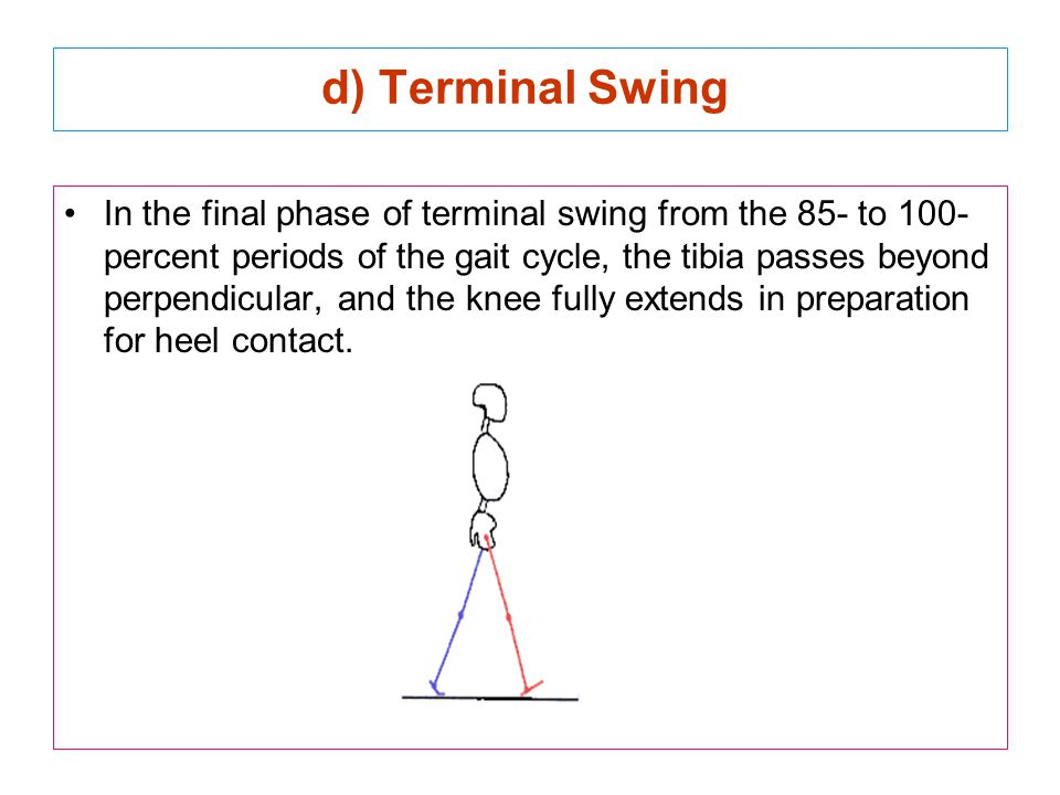 d) Terminal Swing In the final phase of terminal swing from the 85- to 100- percent periods of the gait cycle, the tibia passes beyond perpendicular,
