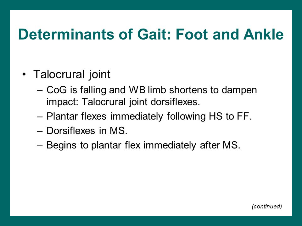 Determinants of Gait: Foot and Ankle Talocrural joint –CoG is falling and WB limb shortens to dampen impact: Talocrural joint dorsiflexes. –Plantar fl