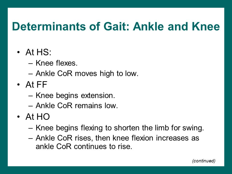 Determinants of Gait: Ankle and Knee At HS: –Knee flexes. –Ankle CoR moves high to low. At FF –Knee begins extension. –Ankle CoR remains low. At HO –K