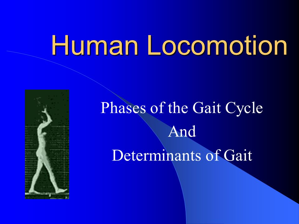 Human Locomotion Phases of the Gait Cycle And Determinants of Gait