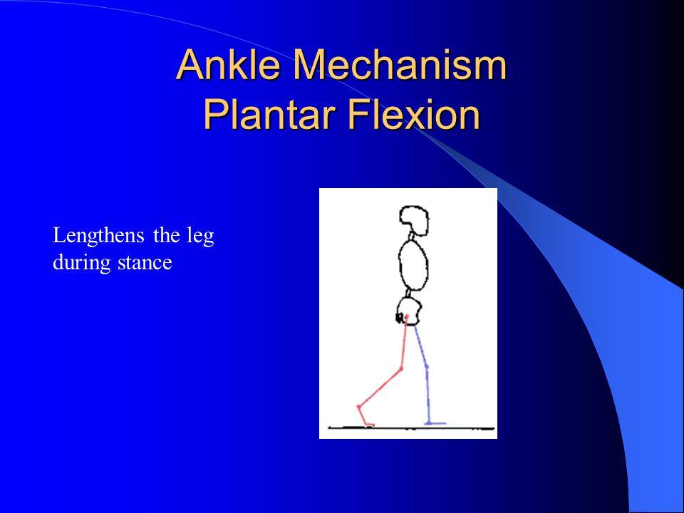 Ankle Mechanism Plantar Flexion Lengthens the leg during stance
