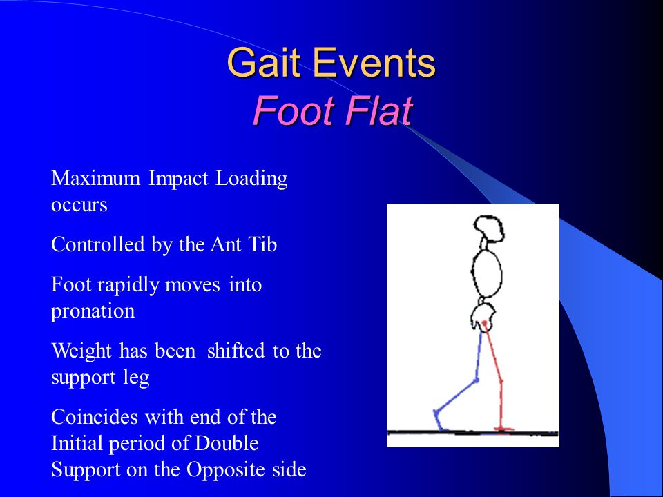 Gait Events Foot Flat Maximum Impact Loading occurs Controlled by the Ant Tib Foot rapidly moves into pronation Weight has been shifted to the support