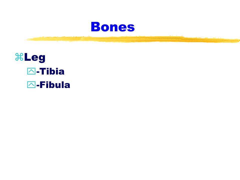 Bones zFoot & Ankle y-14 Phalanges y-5 Metatarsals y-7 Tarsals y-2 Sesamoids