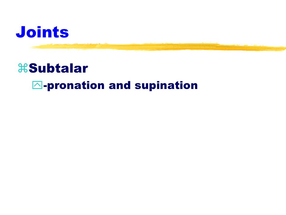 Joints zSubtalar y-pronation and supination