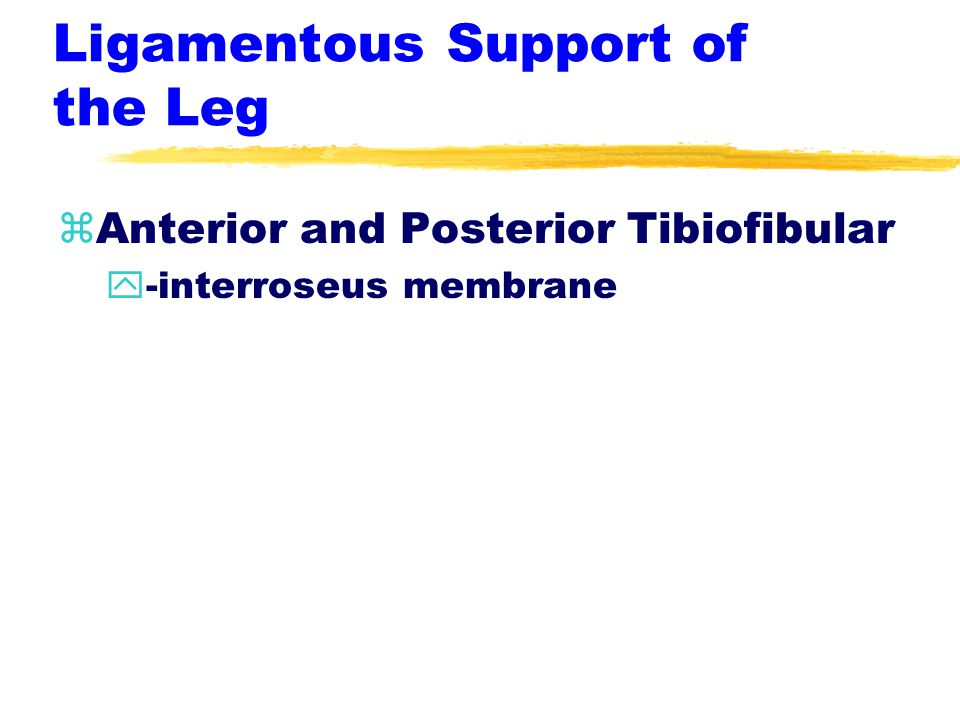 Ligamentous Support of the Leg zAnterior and Posterior Tibiofibular y-interroseus membrane
