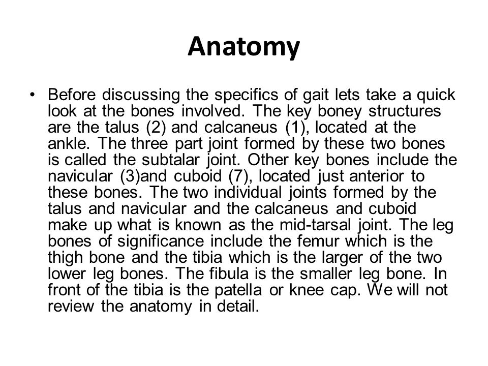 Anatomy Before discussing the specifics of gait lets take a quick look at the bones involved.