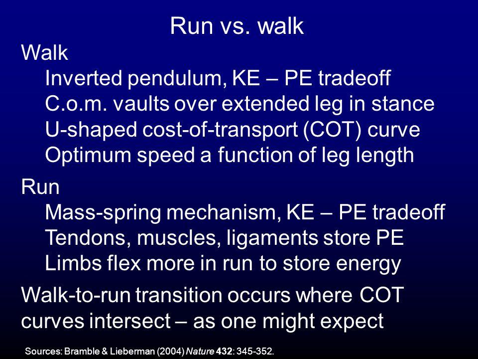 Run vs.walk Walk Inverted pendulum, KE – PE tradeoff C.o.m.