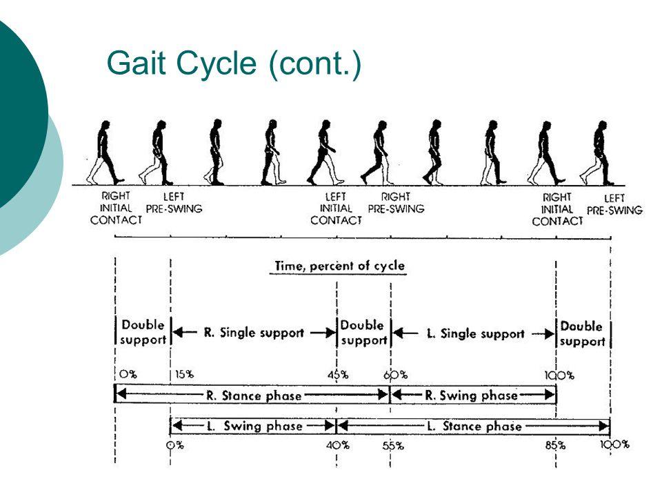 Gait Cycle (cont.)