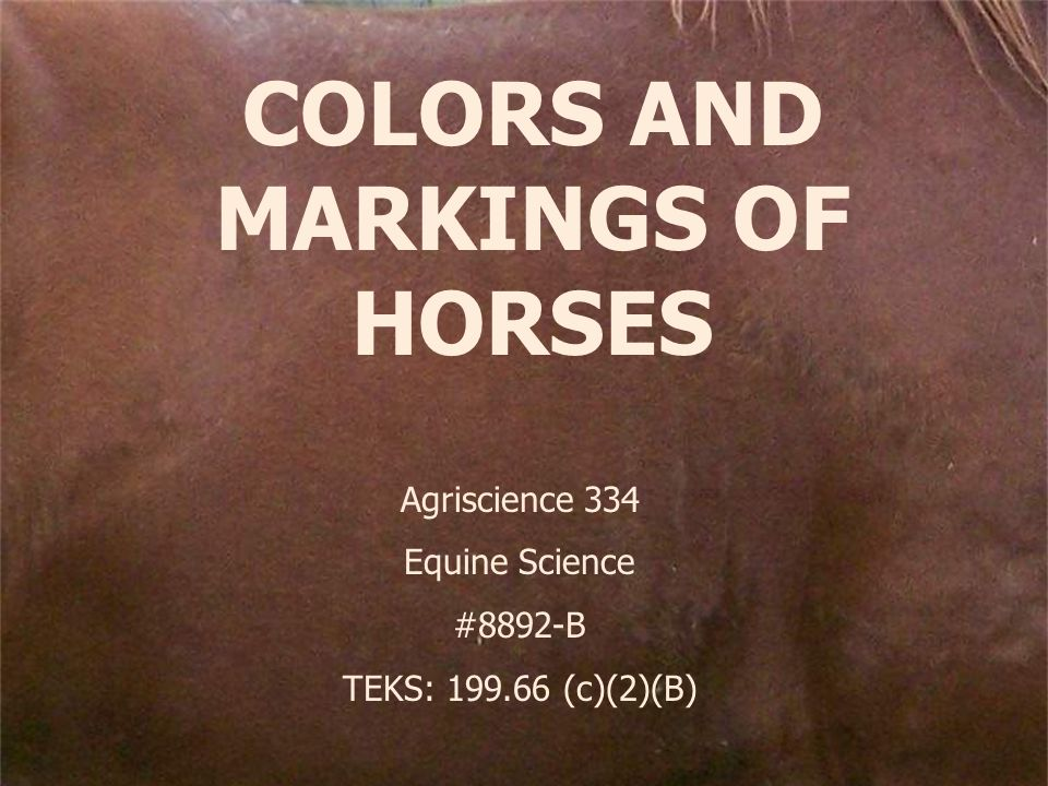 COLORS AND MARKINGS OF HORSES Agriscience 334 Equine Science #8892-B TEKS: 199.66 (c)(2)(B)