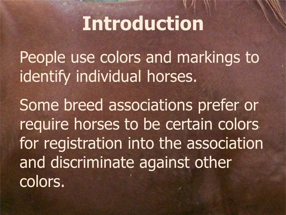 Introduction People use colors and markings to identify individual horses.
