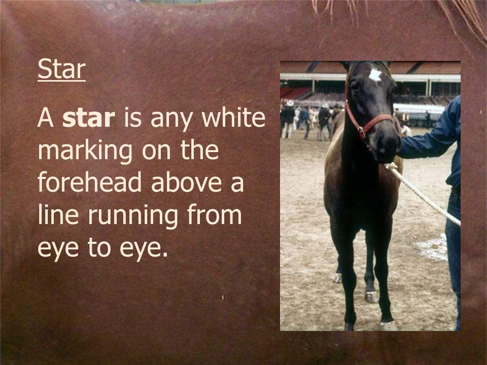 Star A star is any white marking on the forehead above a line running from eye to eye.