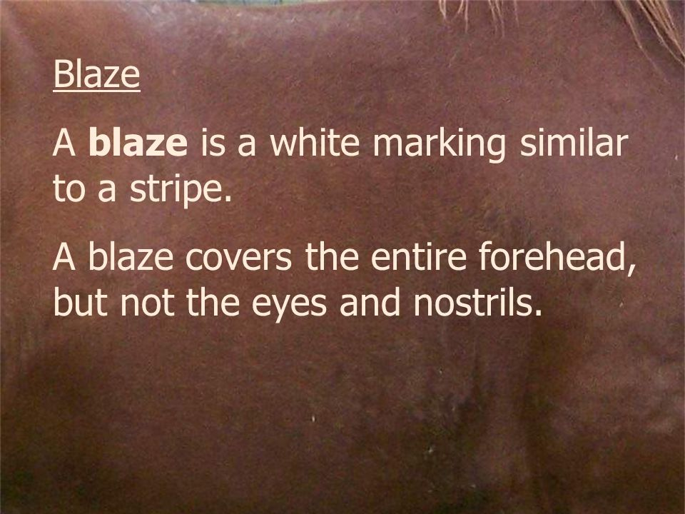Blaze A blaze is a white marking similar to a stripe. A blaze covers the entire forehead, but not the eyes and nostrils.