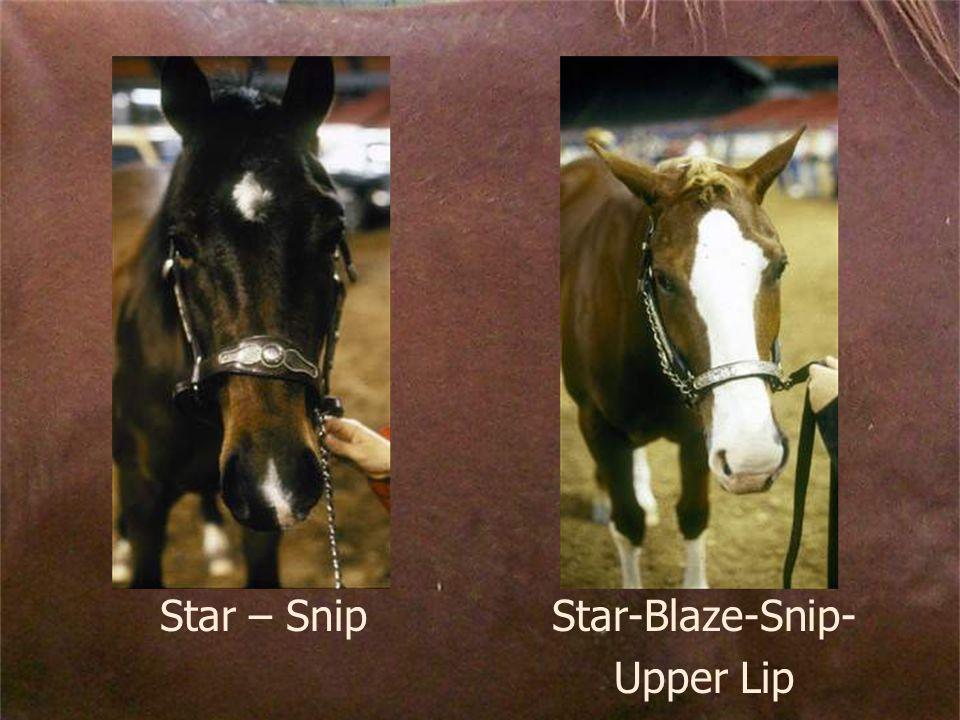 Star – SnipStar-Blaze-Snip- Upper Lip