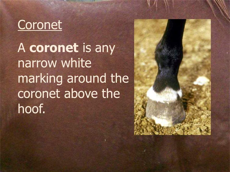 Coronet A coronet is any narrow white marking around the coronet above the hoof.